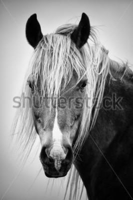 Наклейка Черно-белый портрет лошади