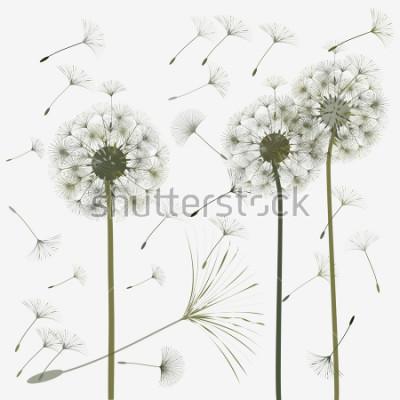 Наклейка Одуванчик для дизайна. Абстрактный фон Ветер дует семена одуванчика. Шаблон для постеров, обоев, постеров. Векторные иллюстрации