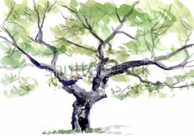 Наклейка дерево, акварель
