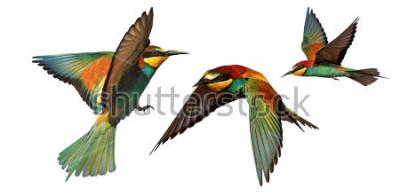 Наклейка набор цветных птиц в полете, изолированных на белом фоне