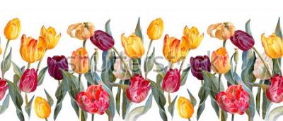 Наклейка Флористическая горизонтальная граница. Красочные тюльпаны на белой предпосылке. Ботаническая иллюстрация. Акварельная живопись.