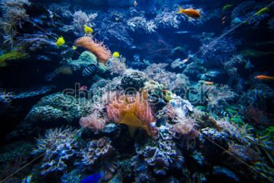 Наклейка подводный пейзаж коралловых рифов с разноцветными рыбками
