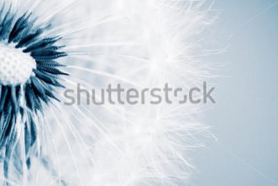 Наклейка Красивый одуванчик с семенами, крупным планом