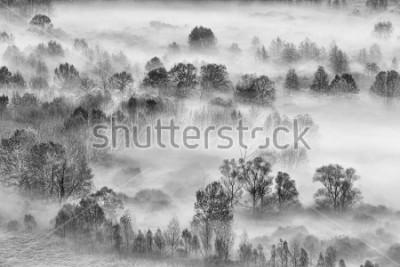 Наклейка Черно-белый пейзаж, туманный лес, Италия