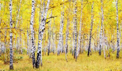 Наклейка березовый осенний лес