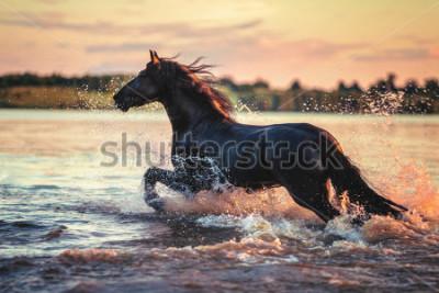 Наклейка Horse