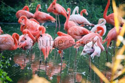 Наклейка flamingo on the pond