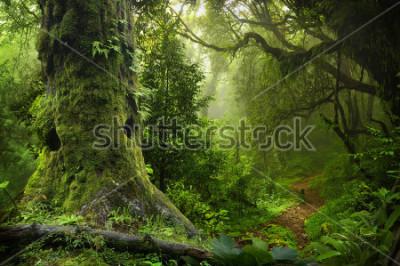 Наклейка Nepal jungle