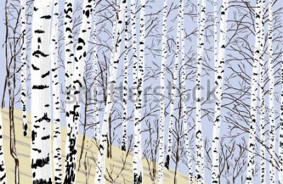 Наклейка birch grove in the spring
