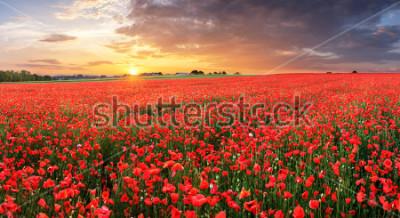 Наклейка Poppy flowers meadow and nice sunset scene