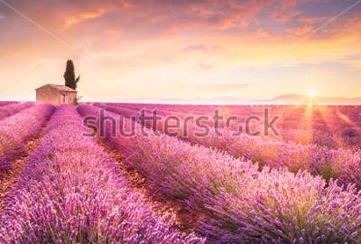 Наклейка Lavender fields at sunrise near Valensole, Provence, France