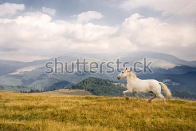 Наклейка White horse