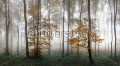 Наклейка Autumn foggy forest. Balkan Mountains, Bulgaria.