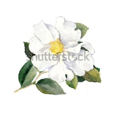 Наклейка Белый цветок. Акварельная ботаническая иллюстрация
