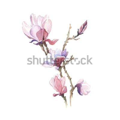 Наклейка Акварельный цветок весны магнолии на белом фоне
