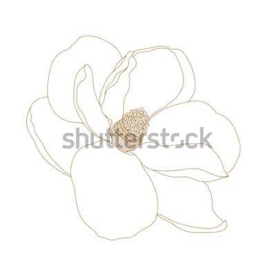 Наклейка Цветок магнолии, вид сверху, изолированные на белом. Графический рисованной магнолии цветы. Чертеж и эскиз цветка вектора Магнолии с черно-белым штрих-искусством.