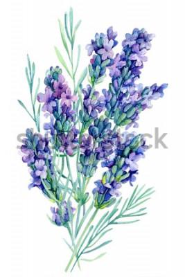 Наклейка Акварельный букет цветов лаванды на белом фоне