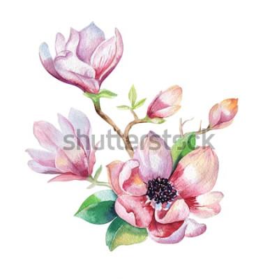 Наклейка Картина Магнолия цветок обои. Ручной обращается акварель цветочные иллюстрации. Цветочный декоративный природный элемент. Старинное искусство watecolour фон.