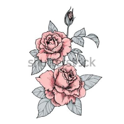 Наклейка Элегантная виньетка с розовыми розами. Ручной обращается отдельные векторные иллюстрации в винтажном стиле