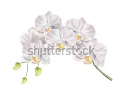 Наклейка Реалистичные белые орхидеи ветка с бутонами на стебле. Шикарное свадебное приглашение, оформление спа салона. Вектор брак пригласительный билет, романтические события элемент. Весна, летний праздник ц