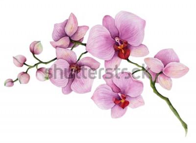 Наклейка Акварель орхидеи филиал, рисованной цветочные иллюстрации, изолированные на белом фоне.