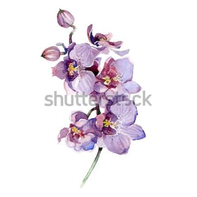 Наклейка Акварель букет орхидей, изолированные на белом фоне.