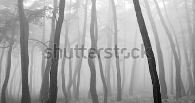 Наклейка Сосна сквозь туман