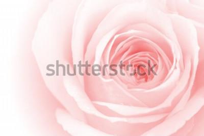 Наклейка крупным планом красочные лепестки роз для фона