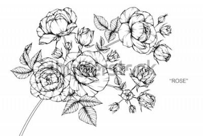 Наклейка Розовые цветы рисунок и эскиз с линией-арт на белом фоне.