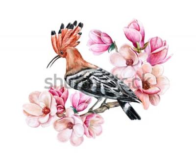 Наклейка Удод птицы сидя на ветви цветя весны. Цветы магнолии. Акварель. Иллюстрация. Шаблон. Clipart. Крупный план. Карта