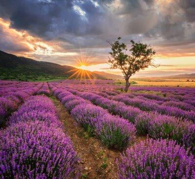 Наклейка Потрясающие пейзаж с лавандой области на рассвете
