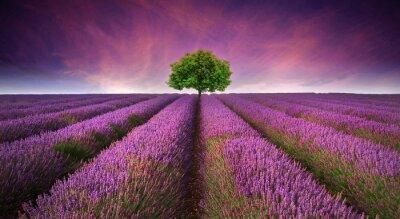 Наклейка Потрясающие сиреневого поля пейзаж Летний закат с одного дерева
