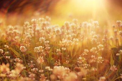 Наклейка Летний пейзаж фон цветы Лучи солнца