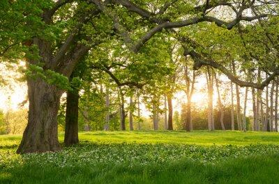Наклейка Солнечный свет в зеленый лес весной
