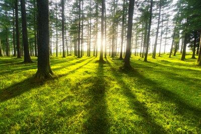 Наклейка Солнечный лес