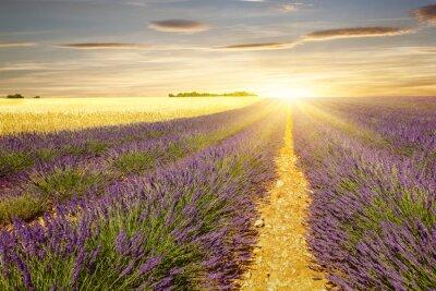Наклейка Закат на лаванды и пшеницы полей