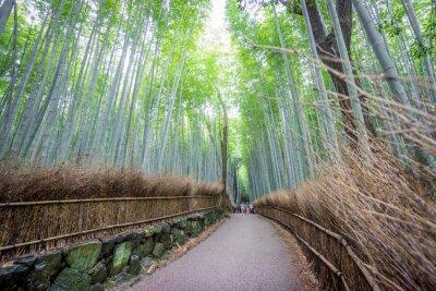 Наклейка Арашияма бамбуковая роща Киото, Япония.