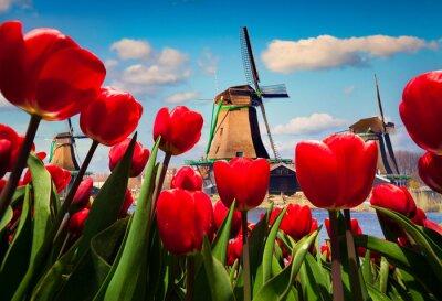 Наклейка Знаменитые голландские ветряные мельницы