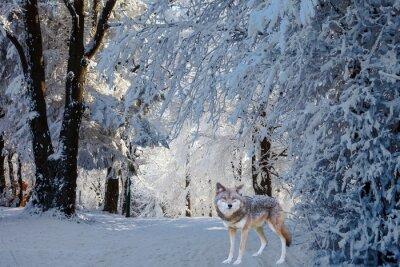Наклейка Великолепный белый полярный волк пришел для охоты