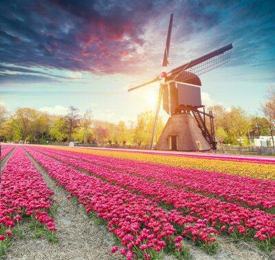 Наклейка Дорога, ведущая к голландским ветряным мельницам из канала в Роттердаме. Голландия. Нидерланды