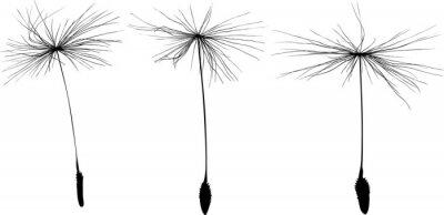 Наклейка three black dandelion seeds silhouette isolated on white