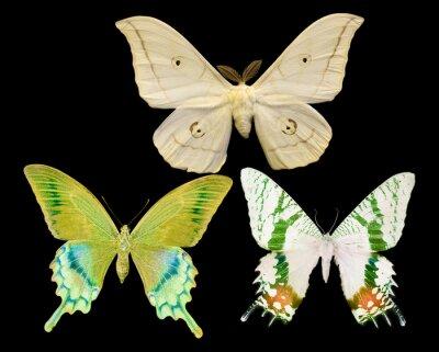Наклейка три бабочки, изолированных на черном