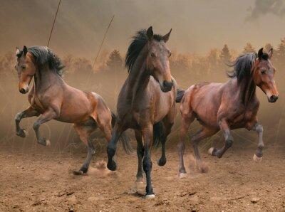Наклейка три лошади