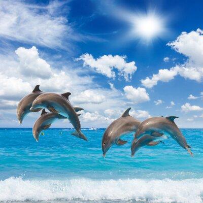 Наклейка три дельфинов, прыжки