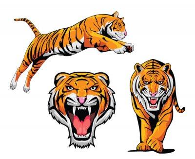 Наклейка Тигр Иллюстрация набор
