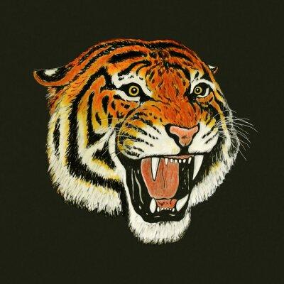 Наклейка тигр рев рисунок