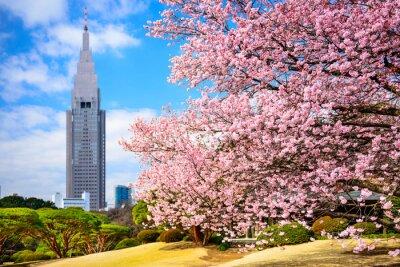 Наклейка Токио, Япония в Синдзюку Гёэн в Spring
