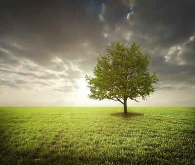 Наклейка дерево