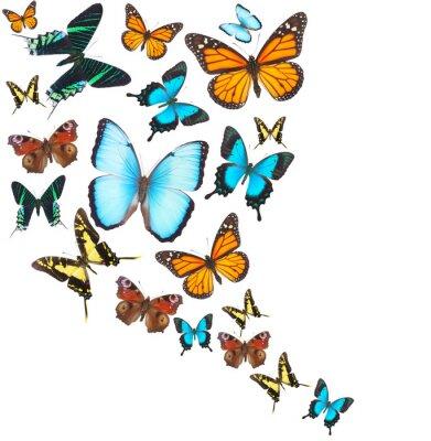 Наклейка Тропические бабочки комплект