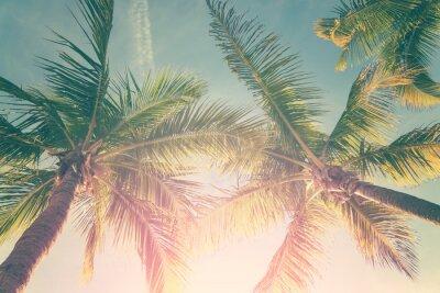 Наклейка Тропический пейзаж с пальмами и солнечное небо